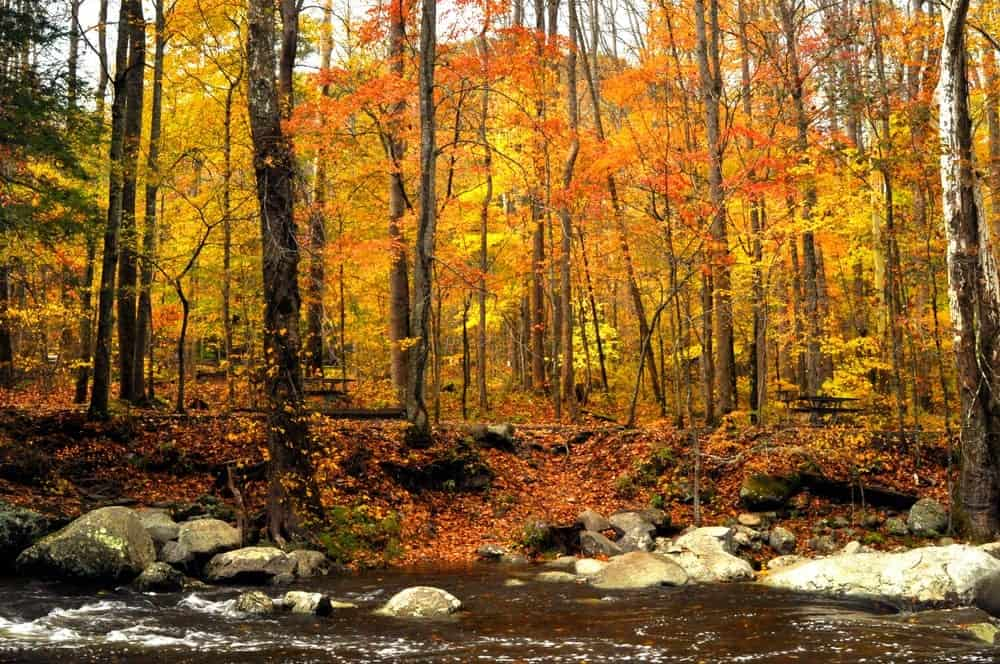 Fall colors next to the river in the Great Smoky Mountains National Park.